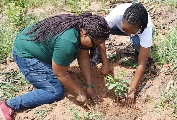 LMA Youth plant trees